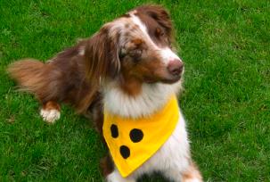 Vermeidet Missverständnisse auf der Straße: Blindenhalstuch für Hunde.